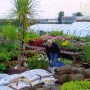 Longbeck nurseries Marske